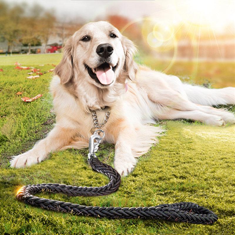 kuidas koolitada kuldretriiver koerad, kuidas rong kuldne retri